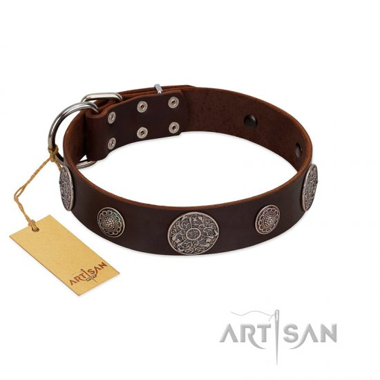 """Flashy Woof"" FDT Artisan Brown Leather Boxer Collar with Chrome Plated Brooches"
