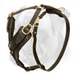Every Day Elegant and Comfortable Leather Harness for Boxer Made of Safe Materials