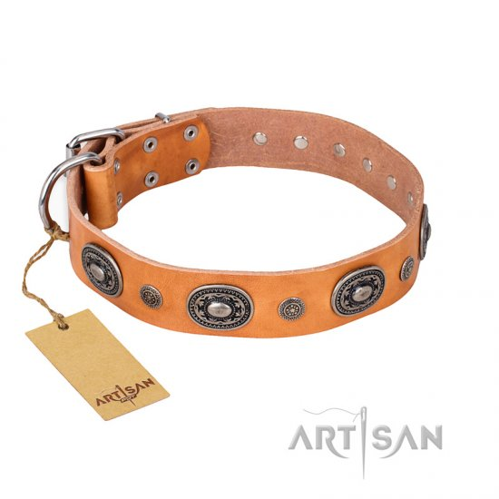 """Twinkle Twinkle"" FDT Artisan Incredible Studded Tan Leather Boxer Collar"