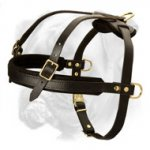 Marvelous Pulling/Tracking/Walking Harness for Active Boxer
