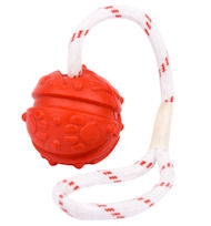 Boxer Bright Fun Ball on a Rope