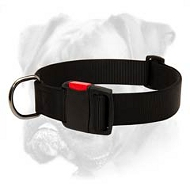 Boxer Nylon Collar for Everyday Walks