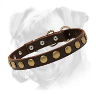 Chic Leather Boxer Collar with Brass Circles