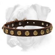Tremendous Leather Boxer Collar with Brass Dotted Circles - Amazing Accessory for Every Dog