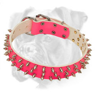Spiked Pink Leather Boxer Collar for Elegant She-Dogs