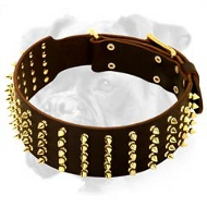 Luxury Leather Boxer Collar with Brass Spikes for Walking