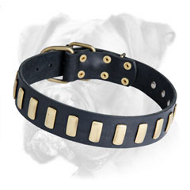 Splendid Leather Boxer Collar with Goldish Plates