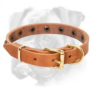 Incredible Leather Boxer Collar with Brass Studs