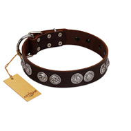 """High and Mighty"" FDT Artisan Classy Brown Leather Boxer Collar with Embellished Brooches"