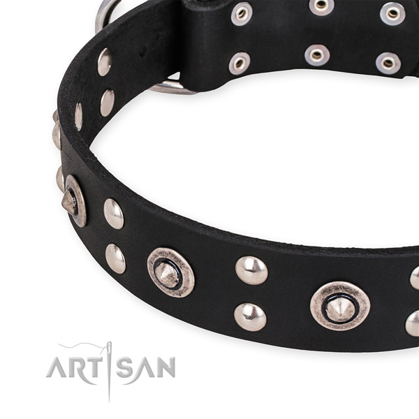 Full grain leather collar with corrosion proof fittings for your handsome four-legged friend