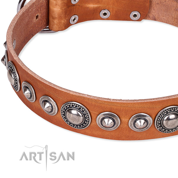 Comfy wearing studded dog collar of quality full grain leather