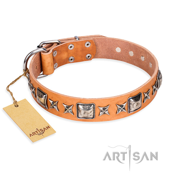 Everyday use dog collar of finest quality full grain genuine leather with adornments