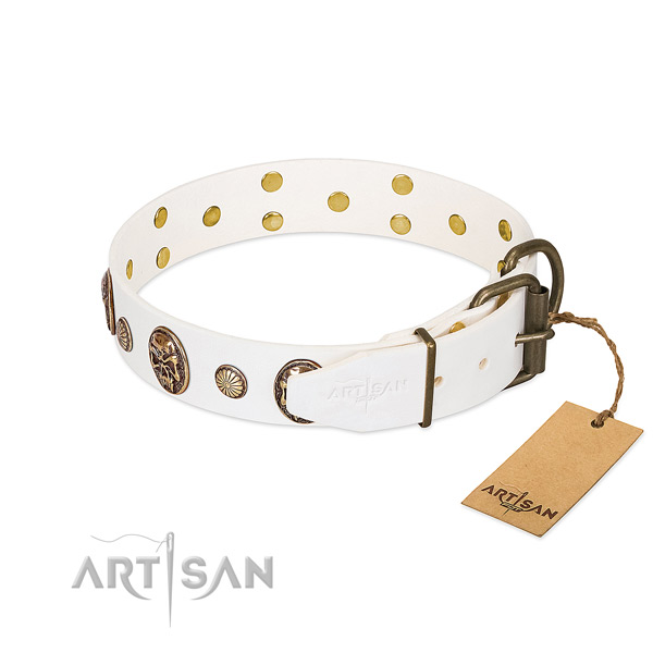 Corrosion proof buckle on full grain leather collar for daily walking your canine