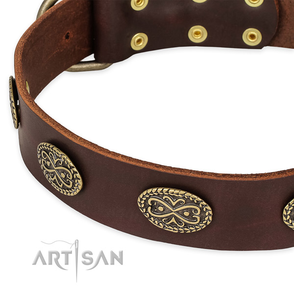 Exceptional leather collar for your lovely canine