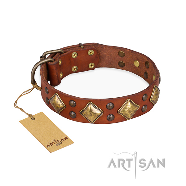 Comfy wearing unique dog collar with strong traditional buckle