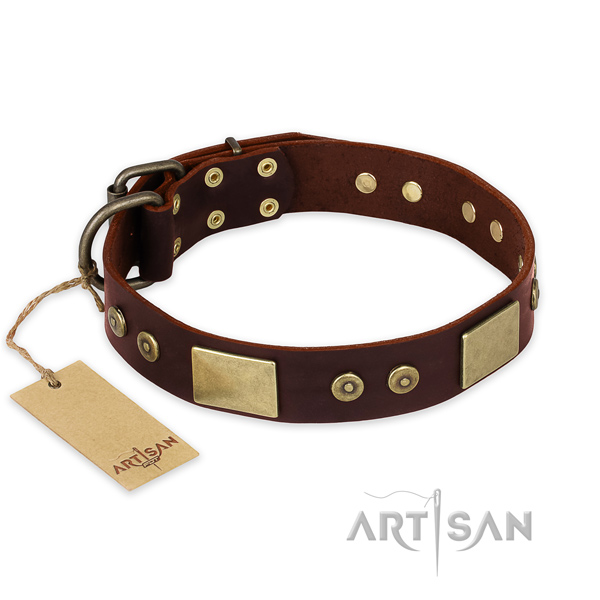 Stunning leather dog collar for daily use