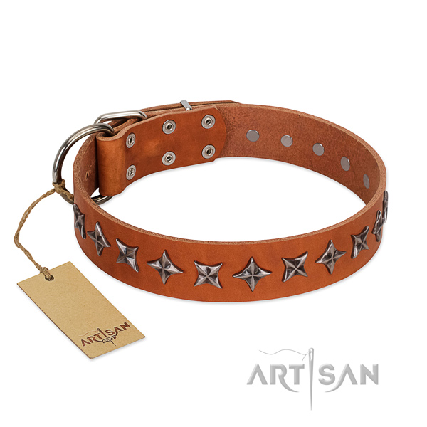 Stylish walking dog collar of fine quality natural leather with adornments
