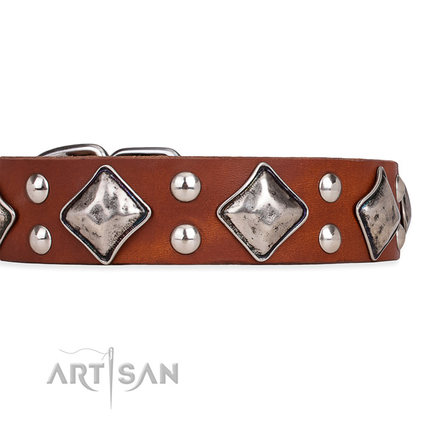 Leather dog collar with trendy corrosion proof embellishments