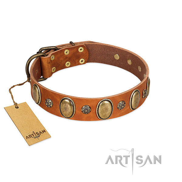 Walking top notch full grain genuine leather dog collar with adornments