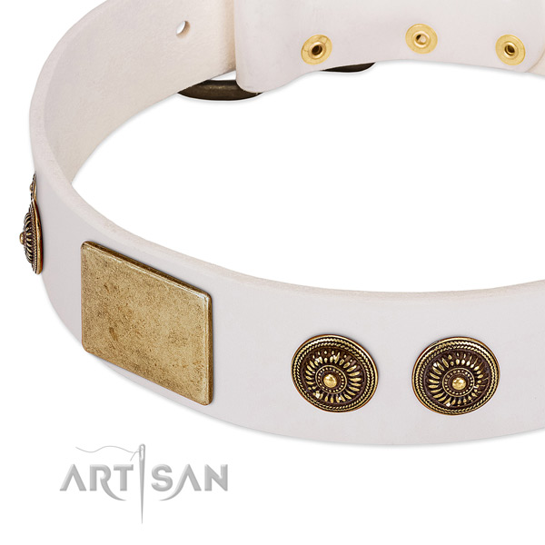 Amazing dog collar made for your stylish doggie