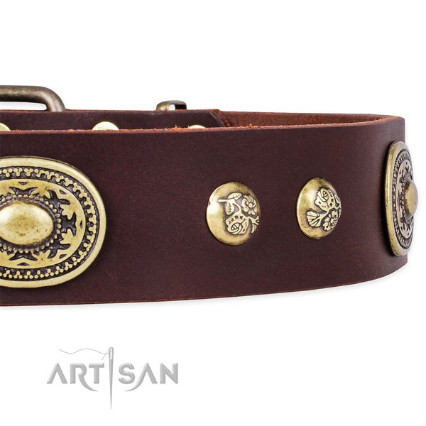 Perfect fit leather collar for your handsome canine