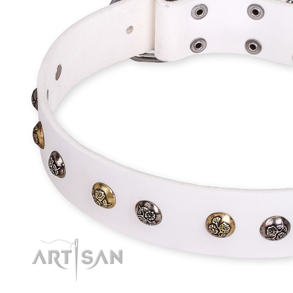 Natural leather dog collar with amazing corrosion resistant adornments