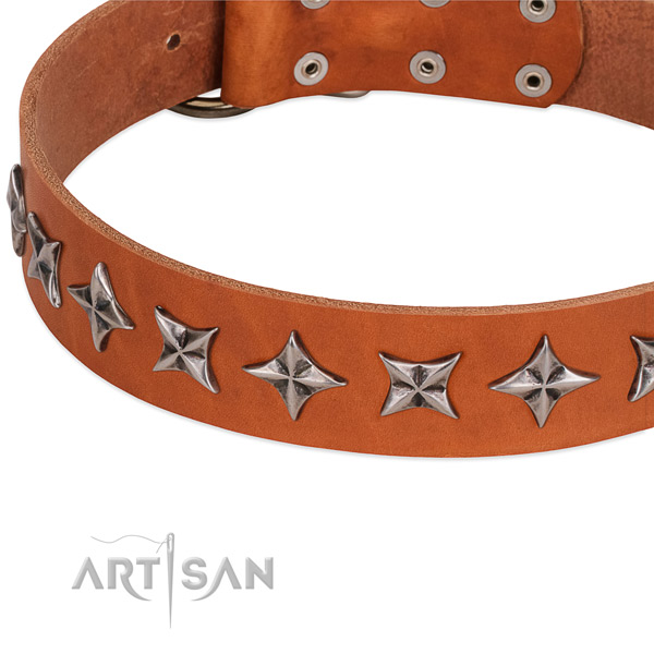 Stylish walking studded dog collar of reliable full grain natural leather