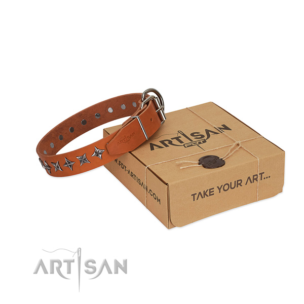 Daily walking dog collar of best quality full grain leather with adornments