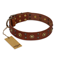 """Unfailing Charm"" FDT Artisan Studded Tan Leather Boxer Collar"