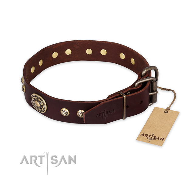 Reliable buckle on leather collar for daily walking your four-legged friend