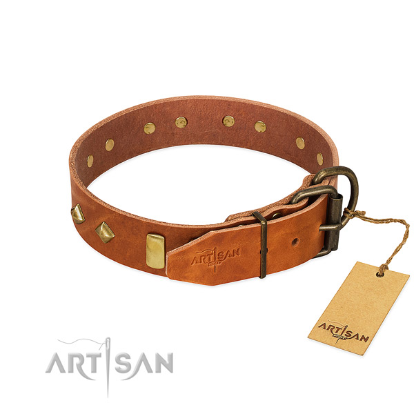 Walking leather dog collar with stylish embellishments