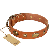 """Visual Magic"" FDT Artisan Tan Leather Boxer Collar for Daily Activities"