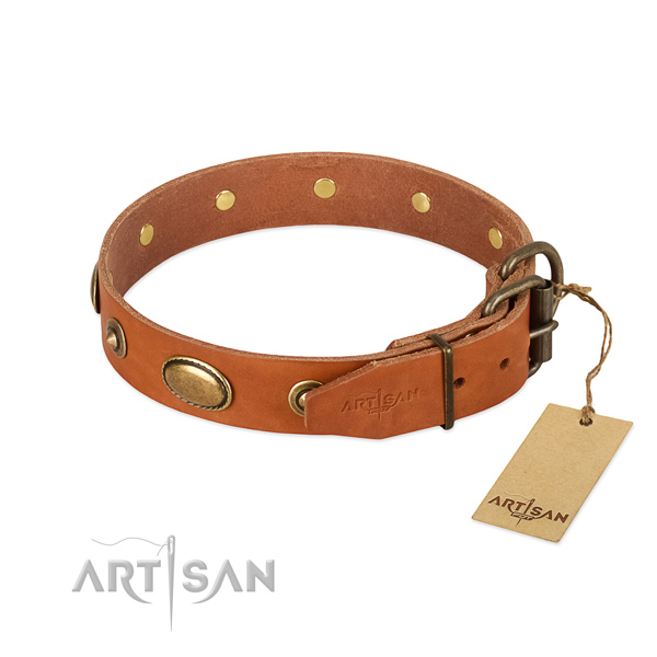 Durable studs on leather dog collar for your dog