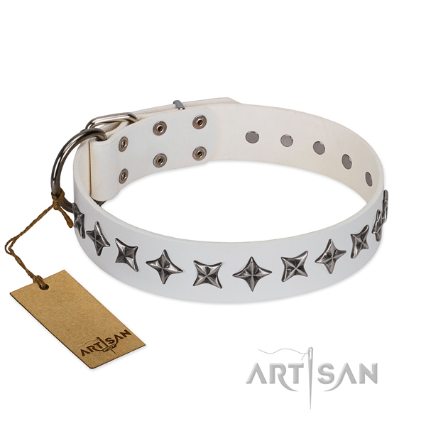 Daily walking dog collar of fine quality genuine leather with embellishments
