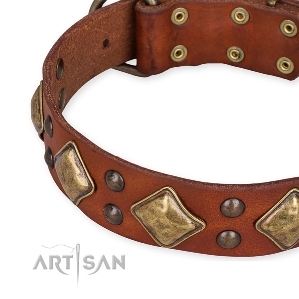 Leather collar with corrosion resistant buckle for your beautiful canine