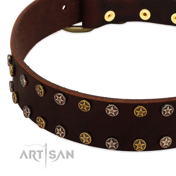 Daily walking full grain leather dog collar with remarkable adornments
