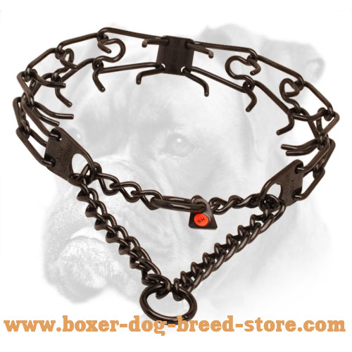 Prong collar of black stainless steel for badly behaved canines