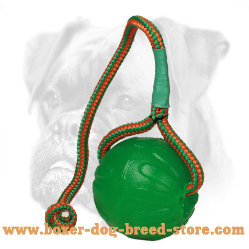 Special Boxer Chewing Toy