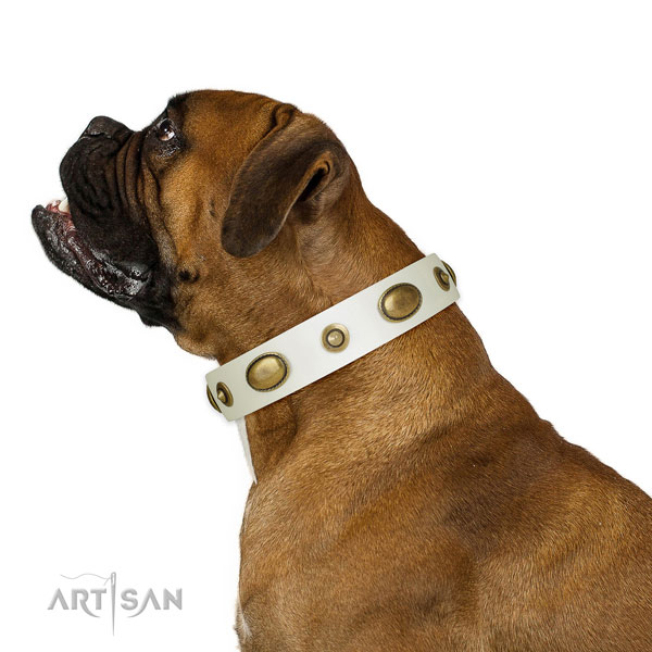 Daily walking dog collar of leather with inimitable adornments