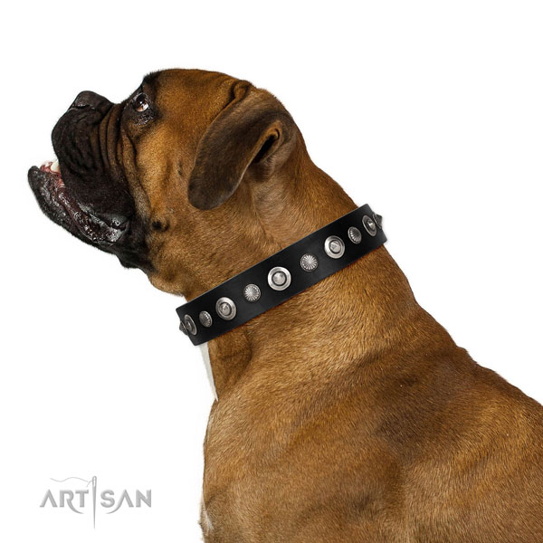 Top notch genuine leather dog collar with amazing embellishments