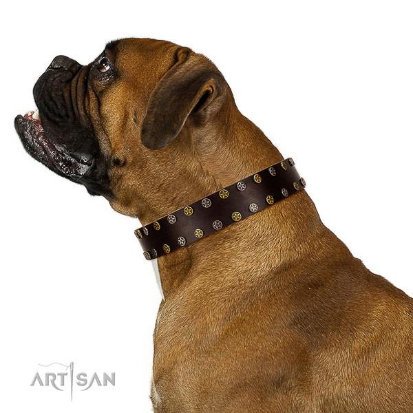 Walking natural leather dog collar with embellishments