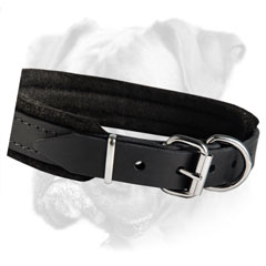 Leather collar for everyday walks