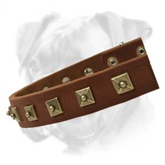 Feature-rich leather collar