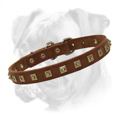 Gorgeous leather collar for your Boxer