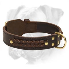 Gorgeous leather Boxer collar
