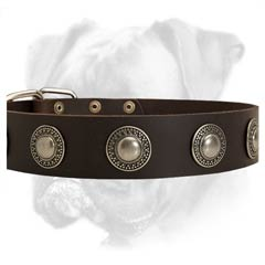 Practical leather Boxer collar
