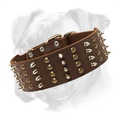 Incredible leather Boxer collar