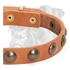 Quality leather collar with nickel studs for Boxer