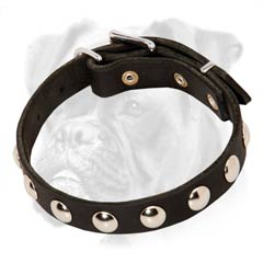 This incredible collar will accentuate Boxer's beauty