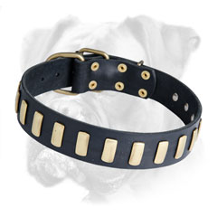 Boxer leather collar for different activities